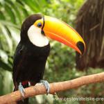 Cestovatelské přednášky - Brazílie - Tukan
