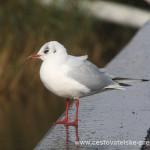 Cestovatelské přednášky - Irsko - Pták