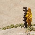 Cestovatelské přednášky - Kapverdy - Květina