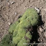Cestovatelské přednášky - Patagonie - Rostliny na Plomu