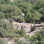 Cestovatelské přednášky - Patagonie - Kaktusy