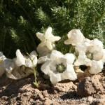 Cestovatelské přednášky - Patagonie - Květy