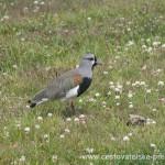 Cestovatelské přednášky - Patagonie - Pták