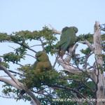 Cestovatelské přednášky - Patagonie - Papoušci