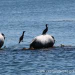 Cestovatelské přednášky - Patagonie - Sádky lososů