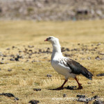 Cestovatelské přednášky - Severní Chile - Pták