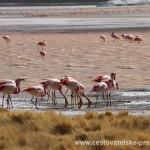 Cestovatelské přednášky - Severní Chile - Plameňáci