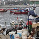 Cestovatelské přednášky - Severní Chile - Rybí trh