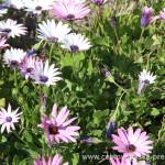 Cestovatelské přednášky - Severní Chile - Květy