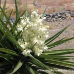 Cestovatelské přednášky - Tenerife - Květ
