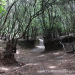 Cestovatelské přednášky - Tenerife - Mlžné lesy
